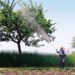 Как максимально правильно выбрать садовый опрыскиватель?